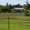 A Rice Field In Prey Veng