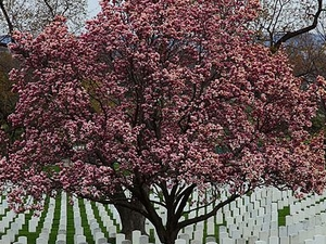 Arlington Cemetery Plus DC War Memorials Photos