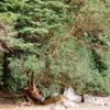Patagonian Flora