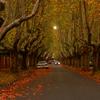 Autumn In Suburban Canterbury