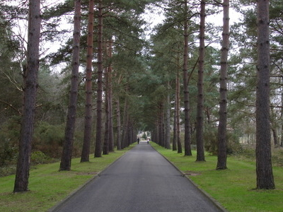 Avenue Leading From  Brookwood Cemetery