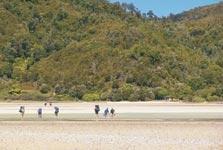 Awaroa to Totaranui Track