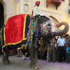 About Jaipur Elephant