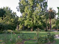 Albury Botanic Gardens