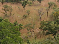 Kourtiagou Reserva
