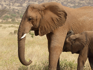 Dine with the Elephants of Samburu Photos