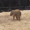 Baby Elephant Dublin Zoo