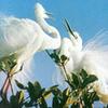 Bac Lieu Santuario de Aves de la Reserva Natural