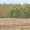 Badalkhol Wildlife Sanctuary
