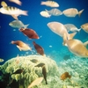 Balicasag Island Fish Sanctuary - Panglao