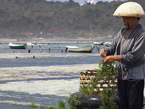 Full Day Balinese Traditional Farming Photos