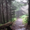 Balsam Trail To Mount Mitchell Summit NC