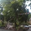 Bamford Green