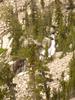 Bannock Falls
