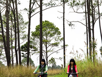 Ban Wat Chan Pine Forest