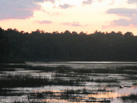 Bass River State Forest