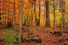 Beartown Woods Natural Area PA - Appalachian Trail