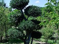 Dokmai Garden