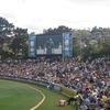 Crowd At Bellerive Oval