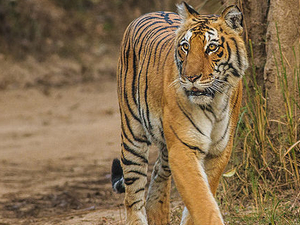 Jim Corbett National Park Adventure In Luxury Photos
