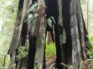 Berry Glen Trail