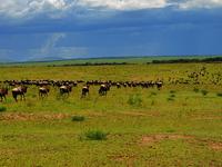 Best Safari Offers Kenya - Valid Till 30th Oct 2017 !