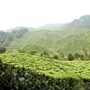 Bharat Plantations Cameron Highlands