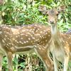 Bhitarkanika National Park Jpg2