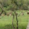 Bhitarkanika National Park Jpg4