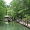 Bhitarkanika National Park Jpga
