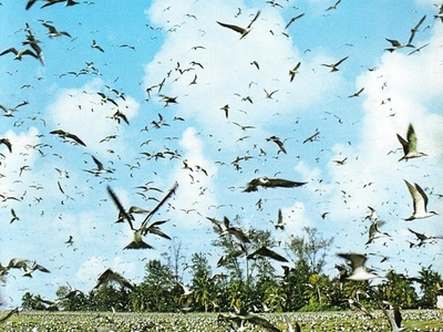 Bird Flocks  Bird  Island  Seychelles