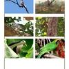Birds Karlapat