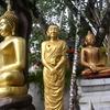 BodhiTreePraPuttarup