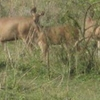 Bornadi Wildlife Sanctuary