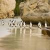 Boulders Beach - Western Cape SA