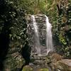Gondwana Rainforests
