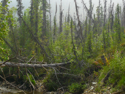 Browncreek Yukon Alaska