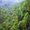 Bruce Trail Bmountain