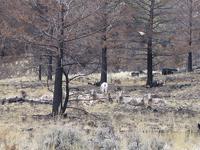 Buffalo Fork Trail