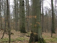 Bukowy Las Nature Reserve