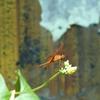 Butterfly Park Views KL