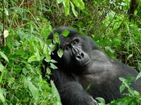 3 Days Uganda Gorilla Safari Express
