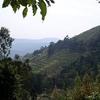 Bwindi Slopes In Uganda