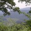 @ Bwindi Swamp - Uganda