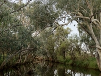 Barcoo River