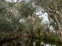Barcoo River