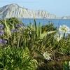 Bare Island