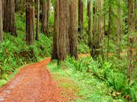 Cal-Barrel Road