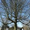 Camberwell Cemeteries