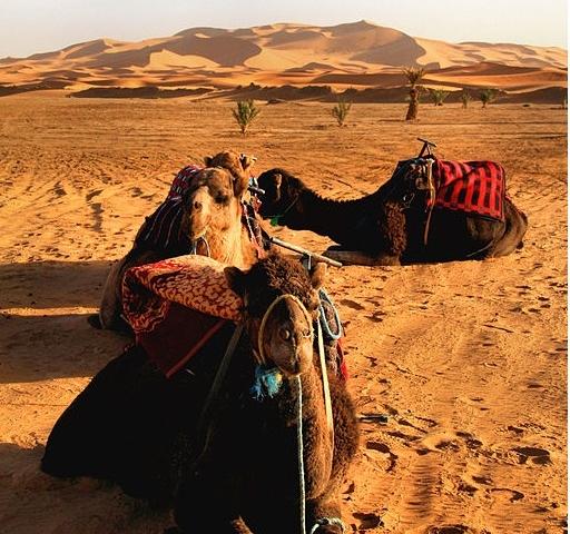 Travel within Morocco' s Tours Photos